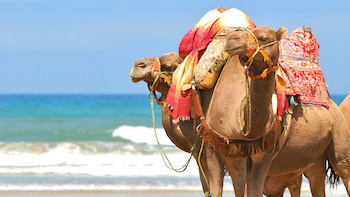 Morocco Weather, Best Time for a Private Tour