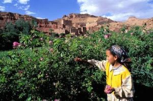 Morocco Family Tour, Valley of Roses and Skoura