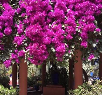 Majorelle Blue – Tour Yves Saint Laurent's Moroccan Gardens