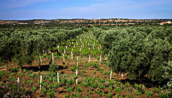 Ounara Winery Tour Essaouira, Morocco Honeymoon